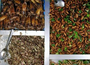 Essen im Ausland - kambodschanische Maden